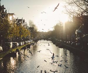 bird, city, and nature image