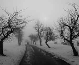 black and white, landscape, and cold image