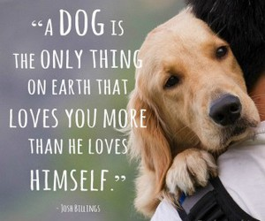dog, true, and love image