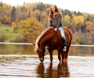equestrian, horse, and photography image