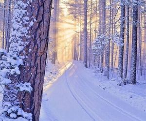beautiful, season, and winter image