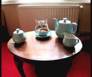 animal, cat, and coffee table image
