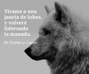 lobos, frases, and fuerza image