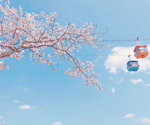 cherryblossom, ferris wheel, and japan image