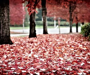 fall, leaves, and red image