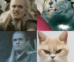 Legolas, cat, and funny image
