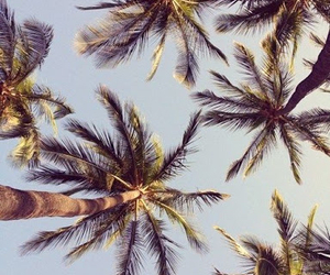 palms and trees image