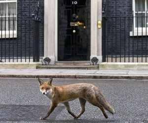 animals, fox, and london image
