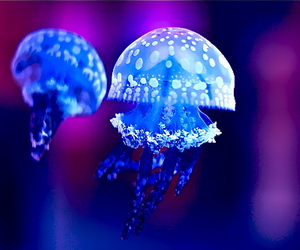 jellyfish, blue, and animal image