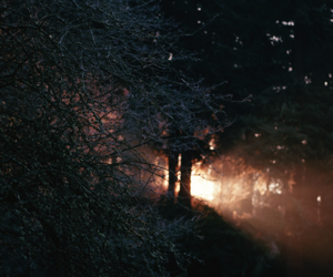 forest, beautiful, and light image