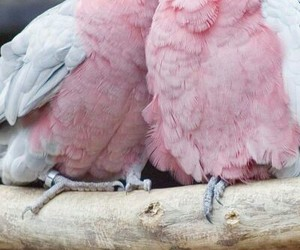 pink, bird, and love image