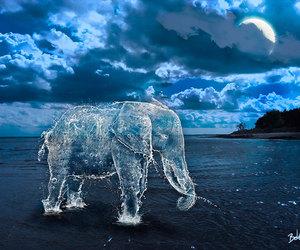 animals, elephants, and sky image