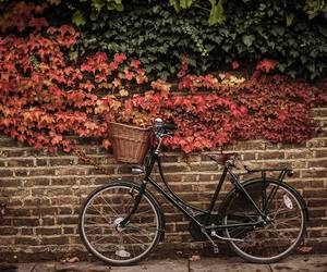 vintage, indie, and bicycle image