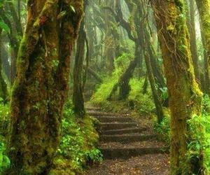 forest and costa rica image
