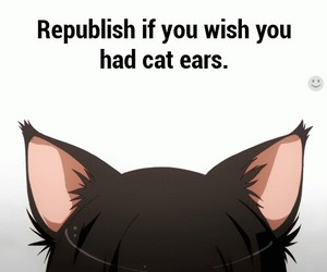 cat and cat ears image