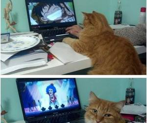 anime, cat, and funny image