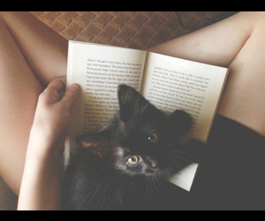 cat, indie, and reading image