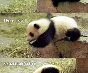 panda and funny image