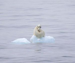 global warming, bear, and sad image