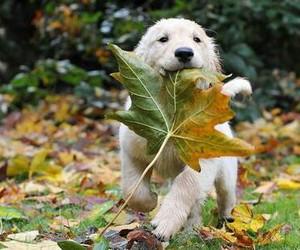 cute, dog, and autumn image