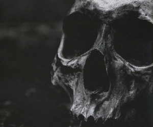 skull, black and white, and black image