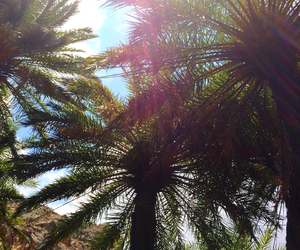 palms, wild, and love image