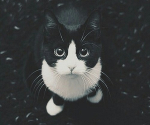 black, grunge, and cat image