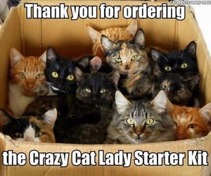 cat, funny, and crazy image
