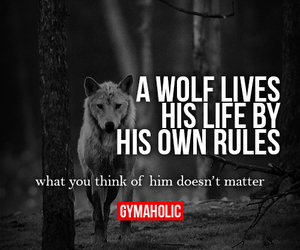 wolf, quotes, and rules image