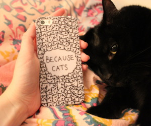 cats, iphone, and phone case image