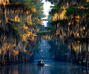 Texas and caddo lake image