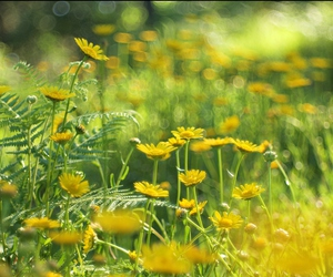 beautiful, cool, and daisies image