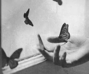 black and white, ♥♥♥, and butterflies image
