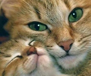 cat, madre, and cute image