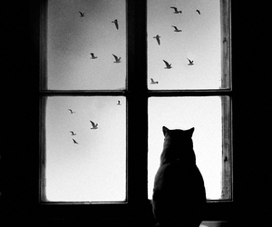 birds, Dream, and black and white image