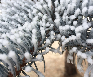 background, tree, and frost image