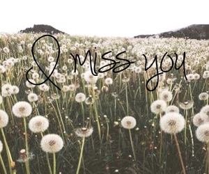 adorable, flowers, and i miss you image