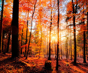 autumn, light, and woods image