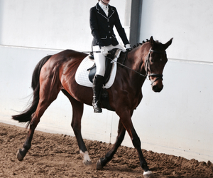 competition, couple, and dressage image