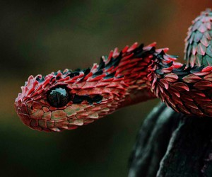 amazing, animal, and cool image