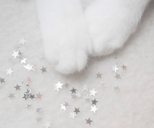 cat, white, and stars image