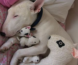 dog, bull terrier, and puppy image
