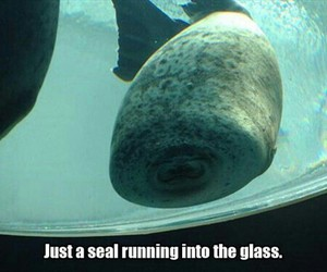 seal, funny, and glass image