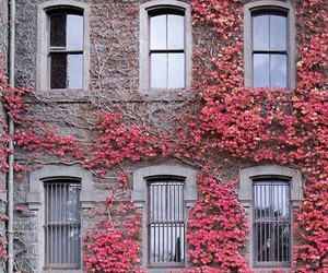 amazing, walls, and flowers image