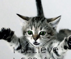 cat, fly, and believe image