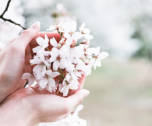 flowers, blossom, and white image