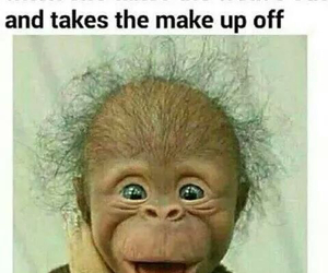 funny and monkey image