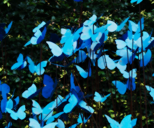 blue, butterflies, and ♥ image