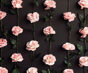 background, flowers, and rosas image