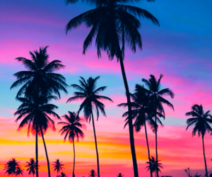 summer, sunset, and palm trees image